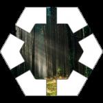 Forest Hex Tile