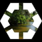 Swamp Hex Tile